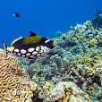 Sulu Sea壁紙の画像(壁紙.com)