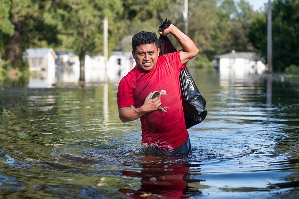 動物「Flood Waters From Hurricane Florence Begin To Flood Parts Of South Carolina」:写真・画像(5)[壁紙.com]