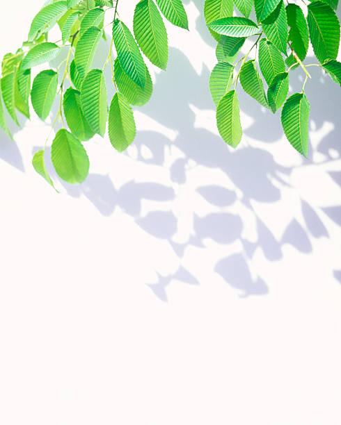 Leaves & Shadows:スマホ壁紙(壁紙.com)