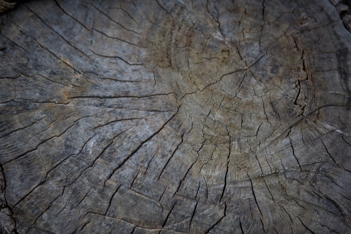 Log「Tree Stump Background」:スマホ壁紙(13)