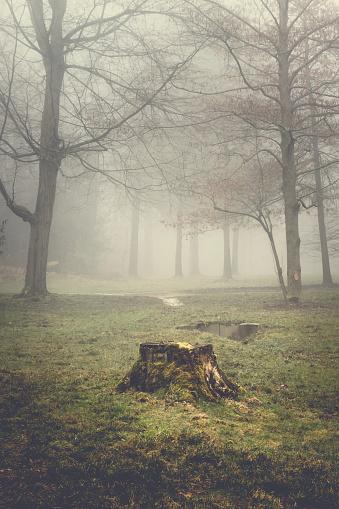 Tree Stump「Tree stump and trees on a hazy morning」:スマホ壁紙(18)