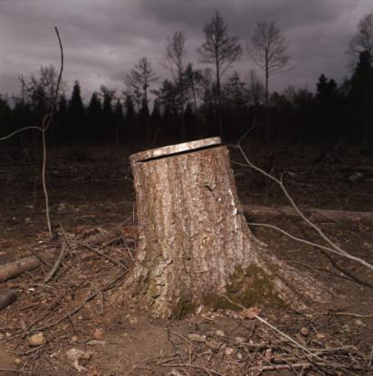 Deforestation「Tree stump in forest, night」:スマホ壁紙(16)