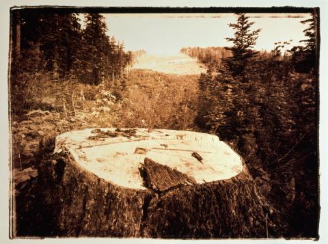 Willamette National Forest「Tree stump in clearing, Willamette Nat. Forest, Oregon, USA(toned B&W)」:スマホ壁紙(19)