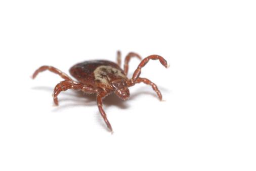 Crawling「Tick on White」:スマホ壁紙(8)