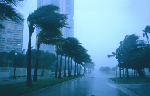 Extreme Weather「tungsten shot of a palm trees blowing in a storm」:スマホ壁紙(8)