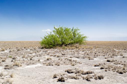 Single Tree「Green bush surviving in the desert」:スマホ壁紙(5)