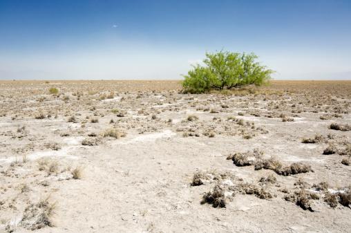 Single Tree「Green bush surviving in the desert」:スマホ壁紙(3)