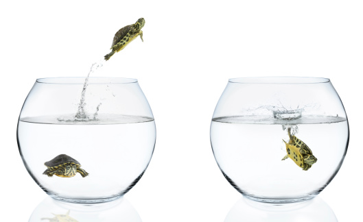 Fishbowl「Turtles Jumping From Fishbowls」:スマホ壁紙(17)