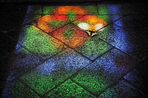 虫・昆虫「Swallowtail butterfly and stained glass window reflection on flag stones」:スマホ壁紙(4)