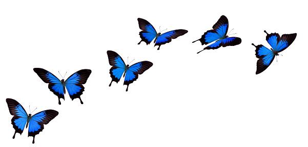 昆虫「アゲハチョウ」:スマホ壁紙(13)