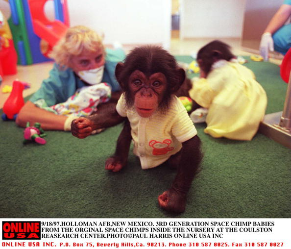 Generation Gap「9/18/97.Holloman AFB, New Mexico. 3rd generation baby Chimps from the original space research monkey」:写真・画像(11)[壁紙.com]