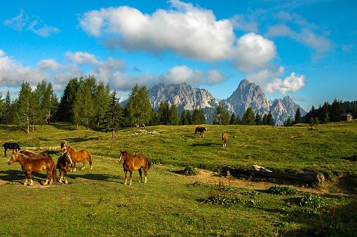 European Alps「Beautiful horses on green pasture in Dolomites」:スマホ壁紙(0)