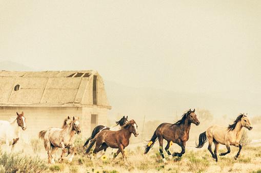 馬「美しい馬の所有者の牧場土地無料実行しています。」:スマホ壁紙(13)
