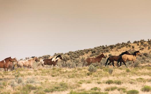 馬「美しい馬の所有者の牧場土地無料実行しています。」:スマホ壁紙(9)