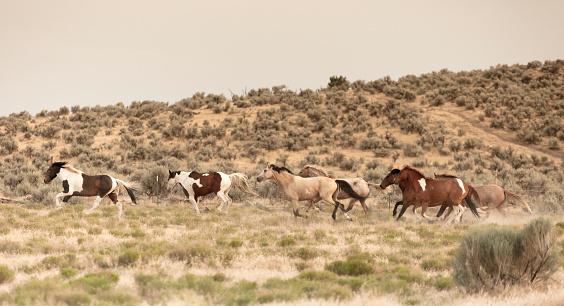馬「美しい馬の所有者の牧場土地無料実行しています。」:スマホ壁紙(10)