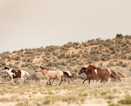 馬「美しい馬の所有者の牧場土地無料実行しています。」:スマホ壁紙(11)