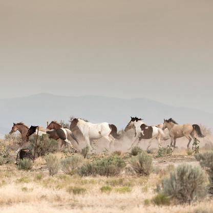 馬「美しい馬の所有者の牧場土地無料実行しています。」:スマホ壁紙(7)