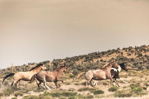 馬「美しい馬の所有者の牧場土地無料実行しています。」:スマホ壁紙(12)