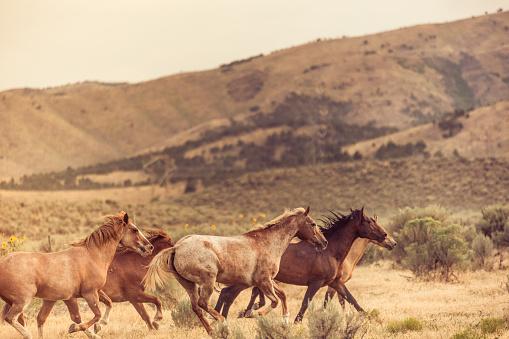 馬「美しい馬の所有者の牧場土地無料実行しています。」:スマホ壁紙(6)