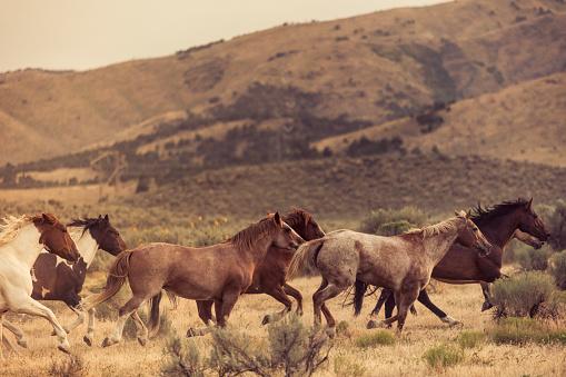 馬「美しい馬の所有者の牧場土地無料実行しています。」:スマホ壁紙(5)