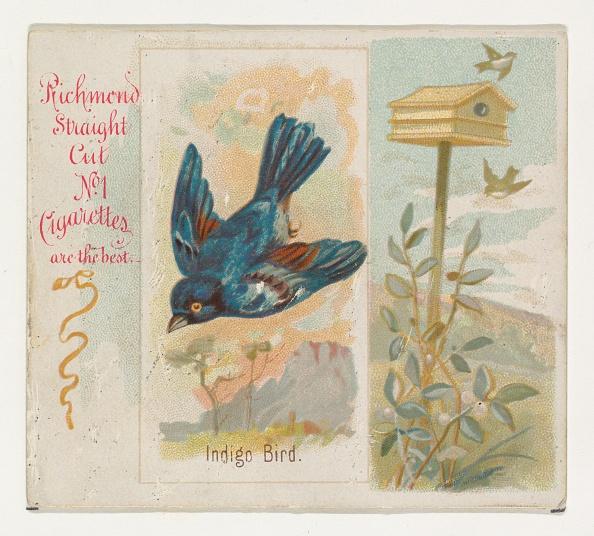 Songbird「Indigo Bird」:写真・画像(8)[壁紙.com]