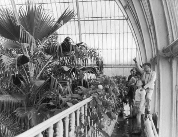 Kew Gardens「Kew Visitors」:写真・画像(6)[壁紙.com]