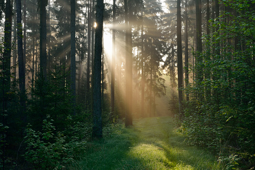 Twilight「Forest with sunbeams and mist. Franconia, Bavaria, Germany.」:スマホ壁紙(15)