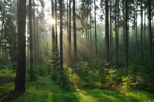 Spirituality「Forest with sunbeams and mist. Franconia, Bavaria, Germany.」:スマホ壁紙(6)