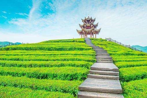 Temple「Tea plantations」:スマホ壁紙(19)