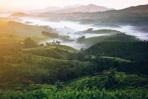 南国「茶葉プランテーションインド」:スマホ壁紙(12)