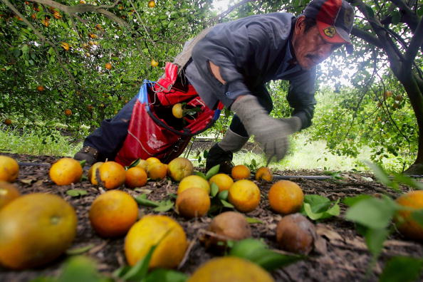 Orange - Fruit「Florida Citrus Production To Be Among Worst In A Decade」:写真・画像(15)[壁紙.com]
