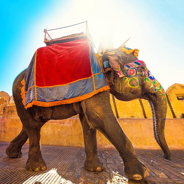 カラフルなインド象:スマホ壁紙(壁紙.com)