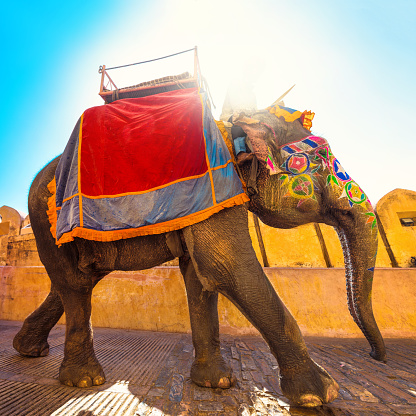 Indian Culture「colorful Elephant in India」:スマホ壁紙(0)