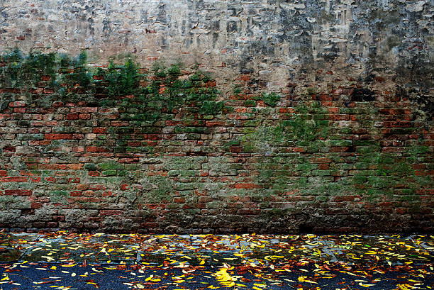 Grungy Old Moss Stained Brick and Mortar Wall Texture Background:スマホ壁紙(壁紙.com)