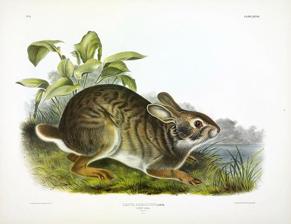 Animal「Swamp Hare」:写真・画像(14)[壁紙.com]