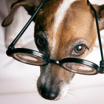 Horn Rimmed Glasses「Jack Russell Terrier with geek glasses」:スマホ壁紙(13)