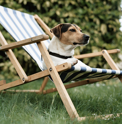 Deck Chair「Jack Russell terrier dog lying in deck chair, low angle view」:スマホ壁紙(10)