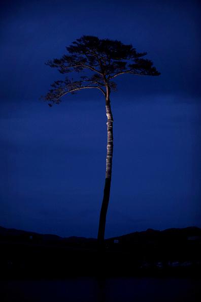 Single Tree「Japan Prepares To Mark 1 Year Anniversary Of Earthquake And Tsunami」:写真・画像(17)[壁紙.com]