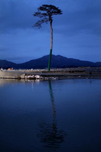 Single Tree「Japan Prepares To Mark 1 Year Anniversary Of Earthquake And Tsunami」:写真・画像(7)[壁紙.com]