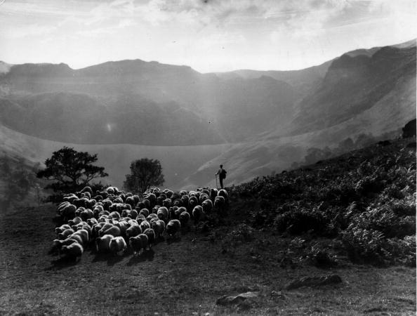 Agriculture「Shepherd And Flock」:写真・画像(17)[壁紙.com]