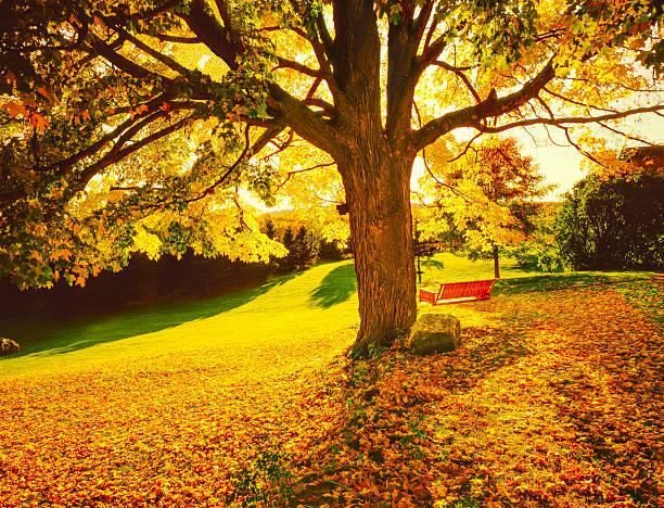 Autumn in New England:スマホ壁紙(壁紙.com)