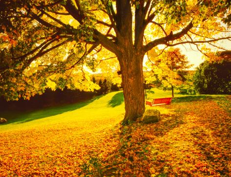 Sugar maple「Autumn in New England」:スマホ壁紙(5)