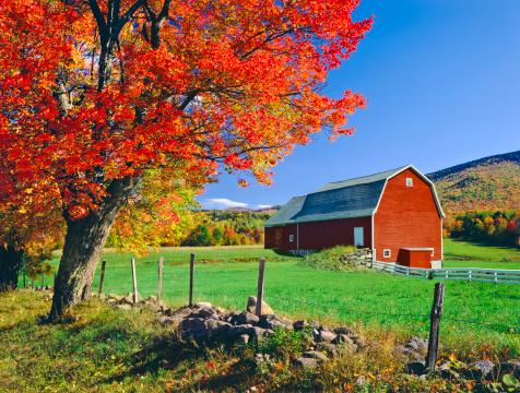 サトウカエデ「ニューイングランド地方の秋」:スマホ壁紙(5)