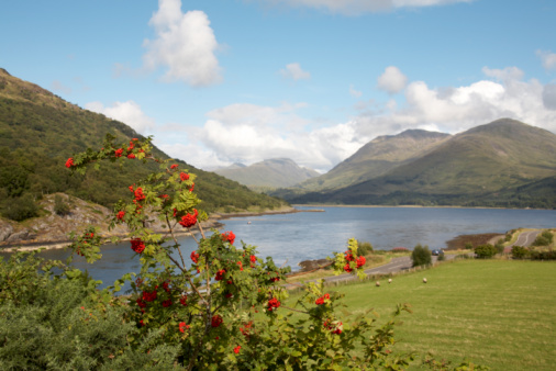 Rowanberry「Rowan tree and Loch Etive, Scotland」:スマホ壁紙(6)