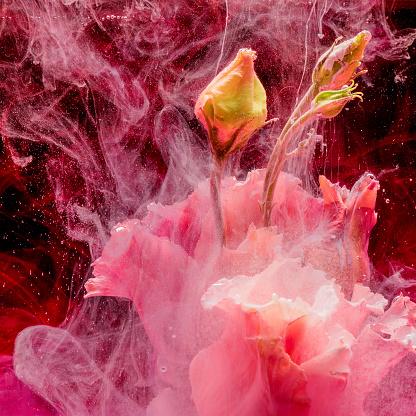Flower Head「Flower in colourful water」:スマホ壁紙(14)