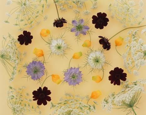 コスモス「Assorted flower heads」:スマホ壁紙(13)