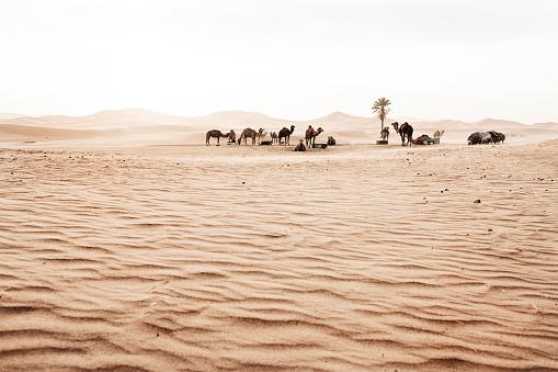 Desert「Nomad's Life」:スマホ壁紙(13)