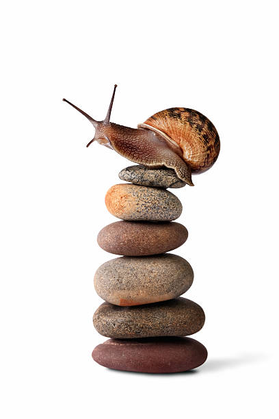 Snail climbing to the top of a pebble stack:スマホ壁紙(壁紙.com)