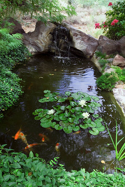 Pond with Koi carp and water lilies, elevated view:スマホ壁紙(壁紙.com)