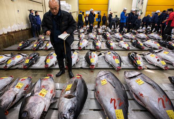 文化「Tsukiji Fish Market Holds First Auction For 2018」:写真・画像(19)[壁紙.com]